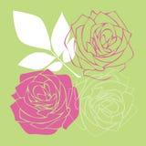 Fiori di Rosa Fotografia Stock Libera da Diritti