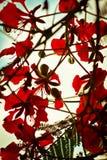 Fiori di rosso Fotografia Stock Libera da Diritti