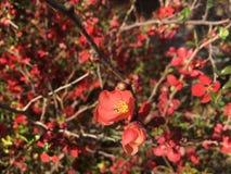 Fiori di rosso della natura fotografia stock