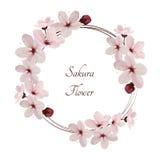 Fiori di Sakura Immagine Stock
