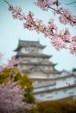 Fiori di Sakura dei fiori di ciliegia fotografia stock
