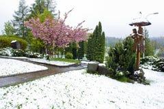 Fiori di Sakura nella neve immagini stock libere da diritti