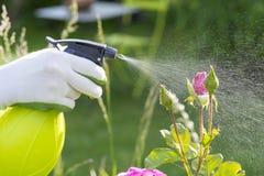 Fiori di spruzzatura della donna nel giardino Immagini Stock Libere da Diritti