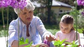 Fiori di studio della ragazza e della nonna al giardino archivi video