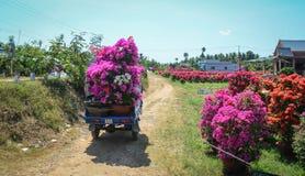 Fiori di trasporto al mercato nel Vietnam Fotografie Stock