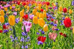 Fiori di tutti i colori dappertutto Fotografie Stock Libere da Diritti