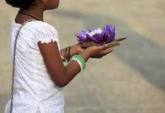 Fiori di un loto in mani Fotografia Stock Libera da Diritti