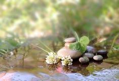 Fiori di un trifoglio e delle pietre per la stazione termale in acqua fotografie stock