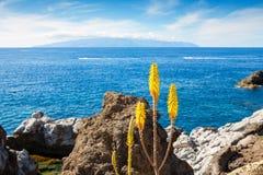 Fiori di Vera dell'aloe. Tenerife, isole Canarie, Spagna Fotografie Stock