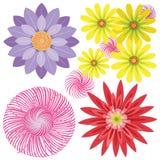 Fiori di vettore del crisantemo Fotografia Stock