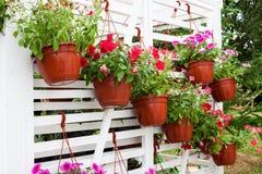 Fiori differenti nel mercato dei fiori Fotografie Stock Libere da Diritti