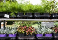 Fiori differenti nel mercato dei fiori Fotografia Stock Libera da Diritti
