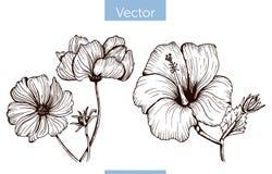 Fiori disegnati a mano di vettore monocromatico su fondo bianco illustrazione vettoriale