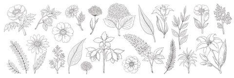 Fiori disegnati a mano Lo schizzo floreale d'annata, l'estate lascia la raccolta delle erbe e dei rami Fogliame e mazzo di vettor illustrazione vettoriale