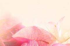 Fiori dolci a colori lo stile d'annata su struttura della carta del gelso Fotografia Stock