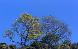 Fiori dolci della primavera Immagini Stock