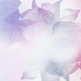 Fiori dolci nello stile d'annata di colore su struttura della carta del gelso Immagine Stock Libera da Diritti