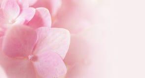 Fiori dolci nello stile della sfuocatura e di morbidezza su struttura della carta del gelso fotografia stock libera da diritti