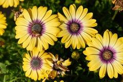Fiori e api, vista superiore Fotografia Stock Libera da Diritti
