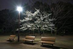 Fiori e banchi di ciliegia in un parco a Tokyo fotografie stock