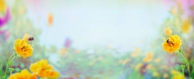 Fiori e bombo gialli del Geum sul fondo vago del giardino o del parco di estate, insegna fotografia stock