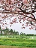 Fiori e campo verde Immagini Stock