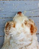 Fiori e cane sulla piattaforma Fotografia Stock