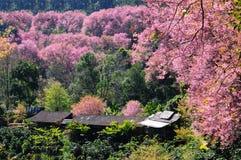 Fiori e capanne di Sakura Fotografia Stock