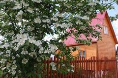 Fiori e casa piacevoli in villaggio Fotografie Stock