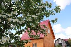 Fiori e casa piacevoli in villaggio Immagine Stock