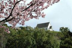 Fiori e chiesa della prugna Fotografie Stock