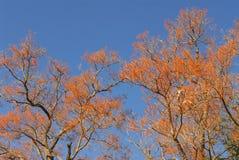 Fiori e cielo Fotografie Stock