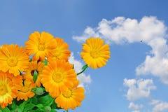 Fiori e cielo blu arancio immagini stock libere da diritti