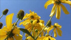Fiori e cielo blu gialli archivi video