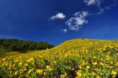 Fiori e cielo gialli Immagine Stock
