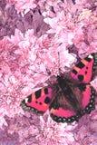 Fiori e farfalla Fotografie Stock Libere da Diritti