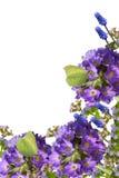 Fiori e farfalle della sorgente fotografia stock libera da diritti