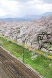 Fiori e ferrovie di ciliegia nei ciliegi di Hitome Senbonzakurathousand a vista alla riva del fiume di Shiroishi veduta da Shibat Immagini Stock Libere da Diritti
