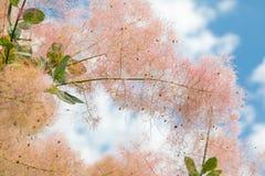 Fiori e foglia degli alberi di estate dello scarabeo fotografia stock