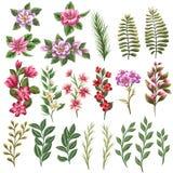 Fiori e foglie Immagine Stock