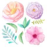 Fiori e foglie dell'acquerello Fotografie Stock Libere da Diritti