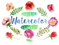 Fiori e foglie dell'acquerello dell'acquerello di vettore illustrazione di stock