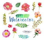 Fiori e foglie dell'acquerello dell'acquerello di vettore Fotografie Stock Libere da Diritti