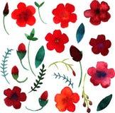 Fiori e foglie dell'acquerello di vettore Fotografia Stock Libera da Diritti