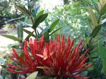 Fiori e foglie della natura Immagini Stock