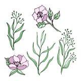 Fiori e foglie della primavera messi dei disegni Ideale per utilizzare nelle progettazioni dell'invito di nozze Immagine Stock