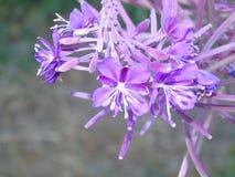 Fiori e foglie di luccichio in parco di Hertfordshire Fotografia Stock Libera da Diritti