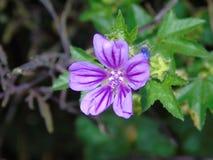 Fiori e foglie di luccichio in parco di Hertfordshire Immagini Stock Libere da Diritti