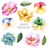 Fiori e foglie dipinti a mano dell'acquerello Immagini Stock Libere da Diritti