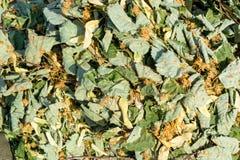 Fiori e foglie secchi di limetta Immagini Stock